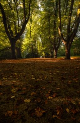 Die ersten Herbsttage #2