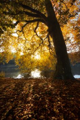 Der Herbst im Ruhrgebiet
